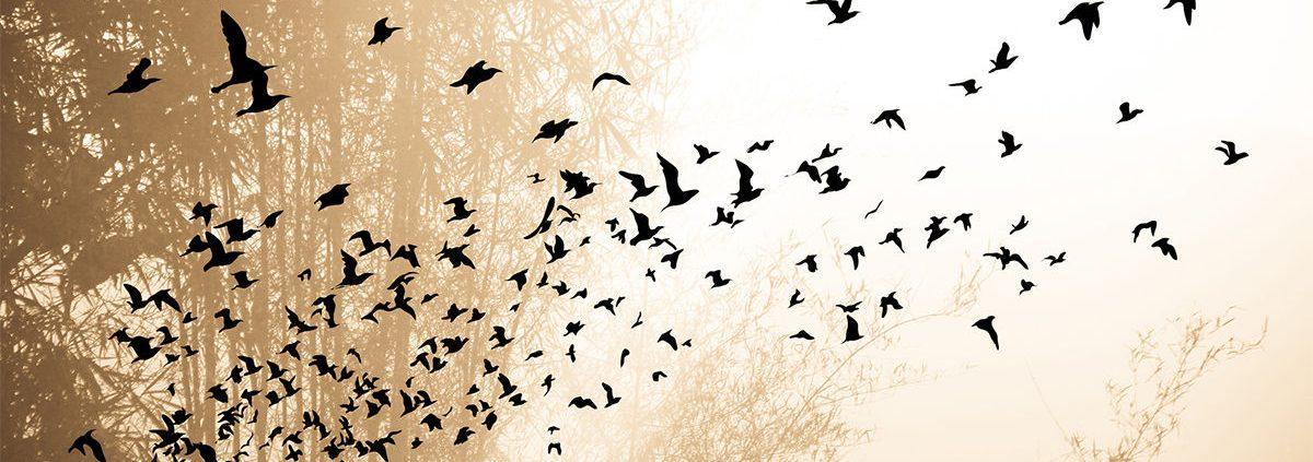 Libérate de tus pensamientos o cómo sentir paz y alegría