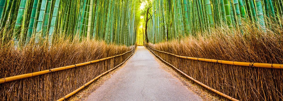 A concrete pathway through a bamboo forest